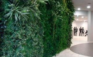 Végétalisation d'intérieur et d'extérieur