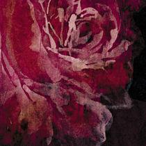 Tissu d'ameublement / à fleurs / en coton / en velours