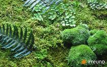 Mur végétal d'intérieur / en végétaux stabilisés