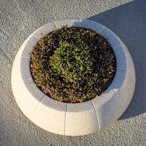 Jardinière en béton / en bois / en marbre / en pierre naturelle