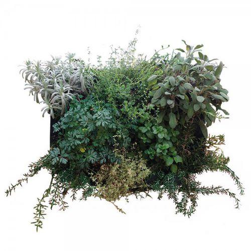 tableau végétal stabilisé / feuillages denses / naturel / d'intérieur