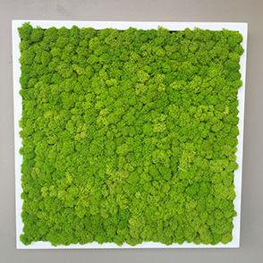 mur végétal stabilisé / en panneau modulaire / naturel / d'intérieur