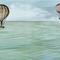 Papiers peints contemporains / en tissu / en vinyle / motif nature BALLONS D'ANTAN Skinwall