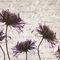 Papiers peints contemporains / en tissu / en vinyle / à motifs floraux LIBER Skinwall