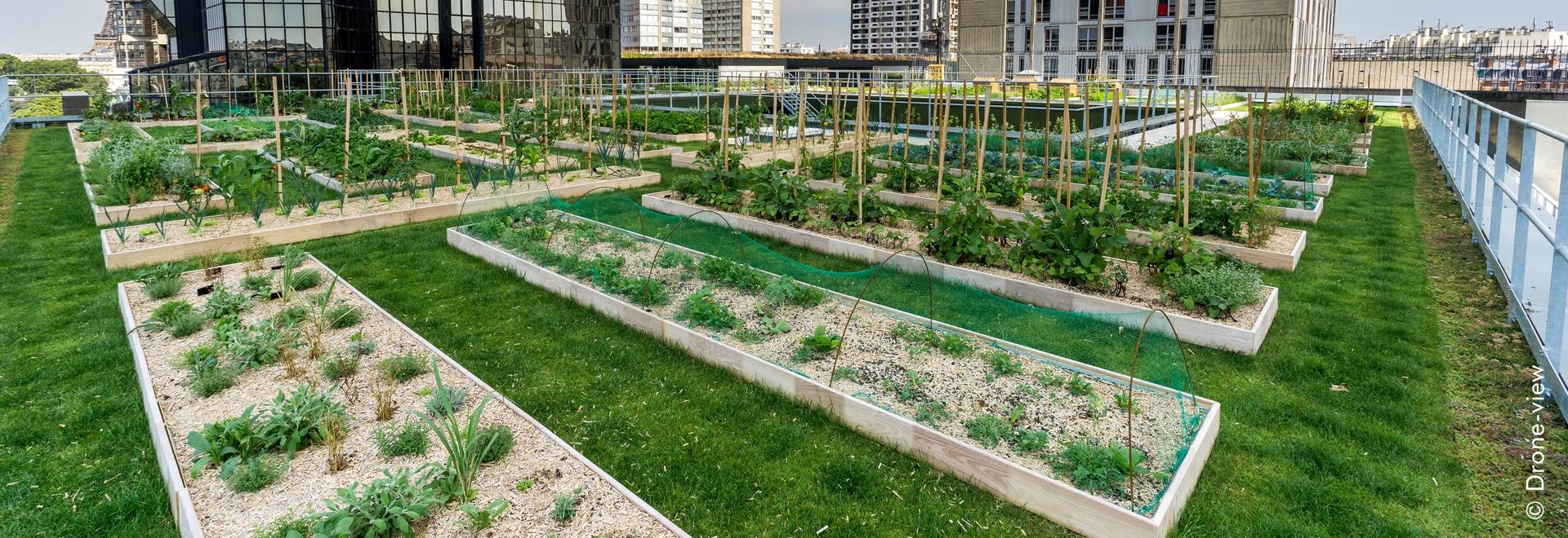 Le jardin de toit agricole urbain sur le dessus de toit du «cordon bleu de le» à Paris