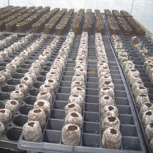 substrat de culture fibre de coco
