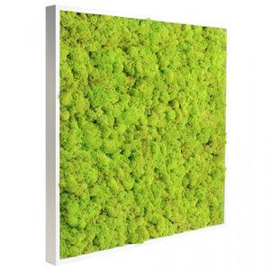 tableau végétal stabilisé / naturel / feuillages denses / en lichen