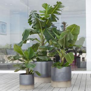 pot de jardin en terracotta / rond / résidentiel / professionnel