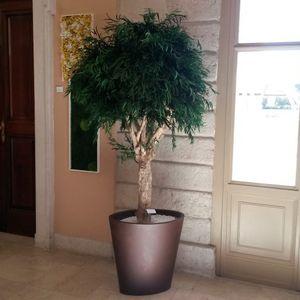 plante ornementale stabilisée / totem