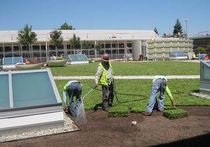 tapis végétal pour toiture-terrasse