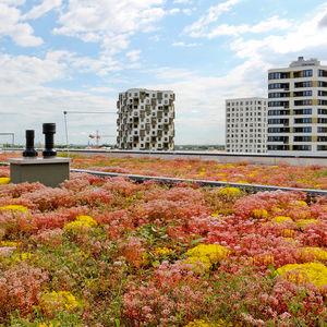 système pour toiture végétalisée pour toit-terrasse