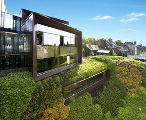 mur végétal en végétaux vivants