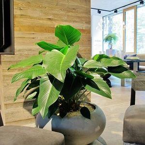 jardin d'intérieur pour bureau