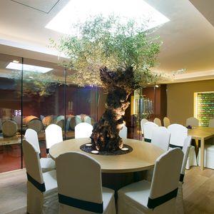 plante ornementale olivier