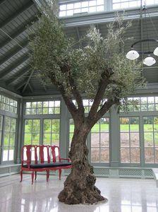 plante ornementale d'orangerie