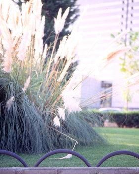 bordure de jardin / en fonte / courbée