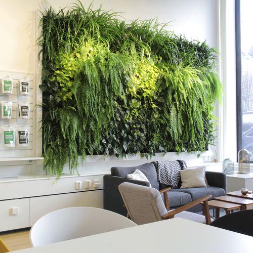 jardin vertical en végétaux vivants / d'intérieur