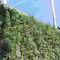 mur végétal d'extérieur / avec structure modulaire
