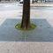 grille d'arbre carrée