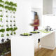 jardin vertical en végétaux vivants / en panneau modulaire / d'intérieur / d'extérieur