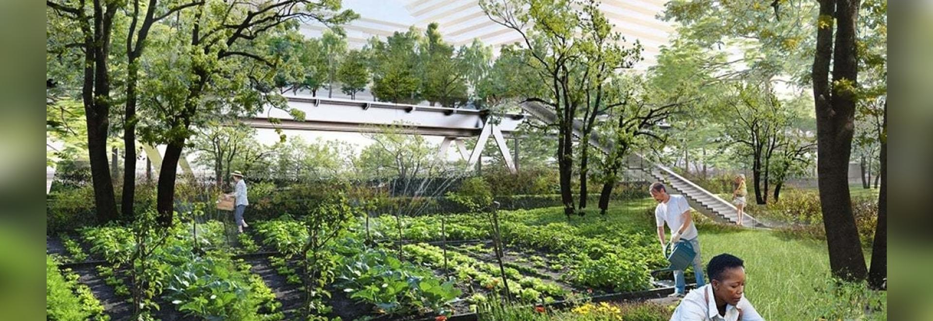 ecozone : jardin communautaire