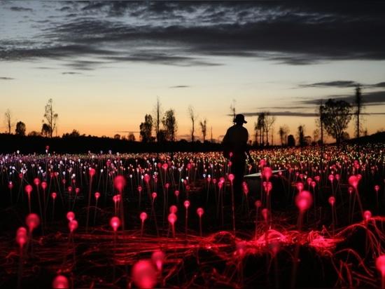 Le champ multicolore de Bruce Munro des fleurs de lumières dans l'affichage renversant de désert