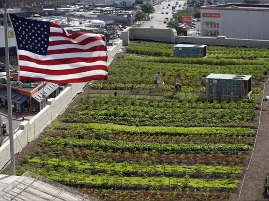 42.000 pieds carrés de ferme urbaine créée sur le dessus de toit de New York