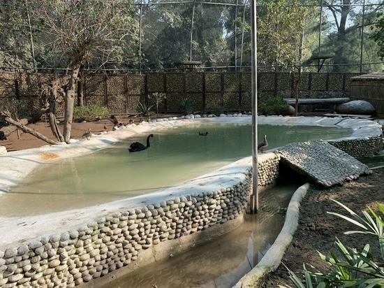 Conçu de façon organique dans une forêt naturelle, le zoo de Chhatbir près de Chandigarh attire une foule de visiteurs